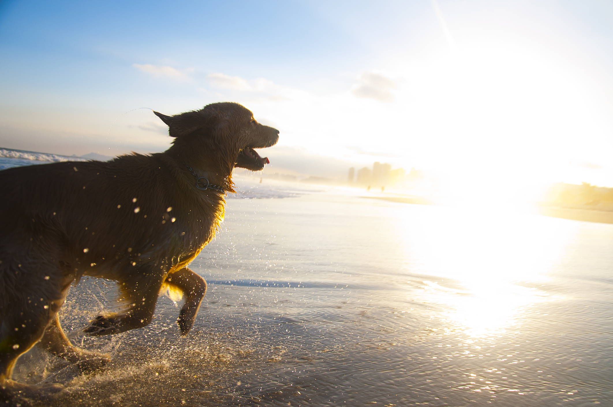 dog-running-on-the-beachjpg