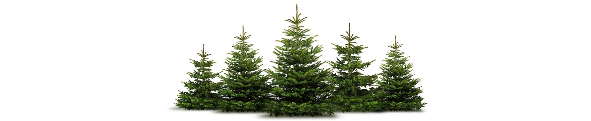 Home page - Obi weihnachtsbaumverkauf ...