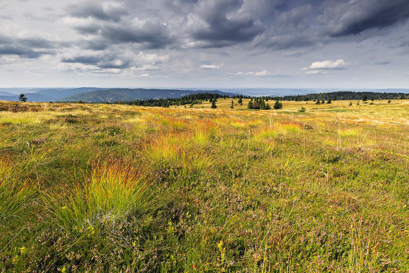 1-landschaft_regenbogenwiese_01_homepagejpg