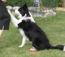"Dog Dancing ""Pfoten"""