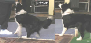 "Dog Dancing ""Retour"""