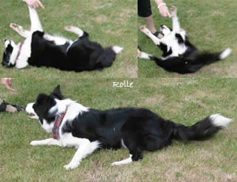 "Dog Dancing ""Rolle"""