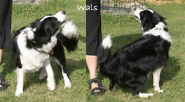 "Dog Dancing ""Wals"""
