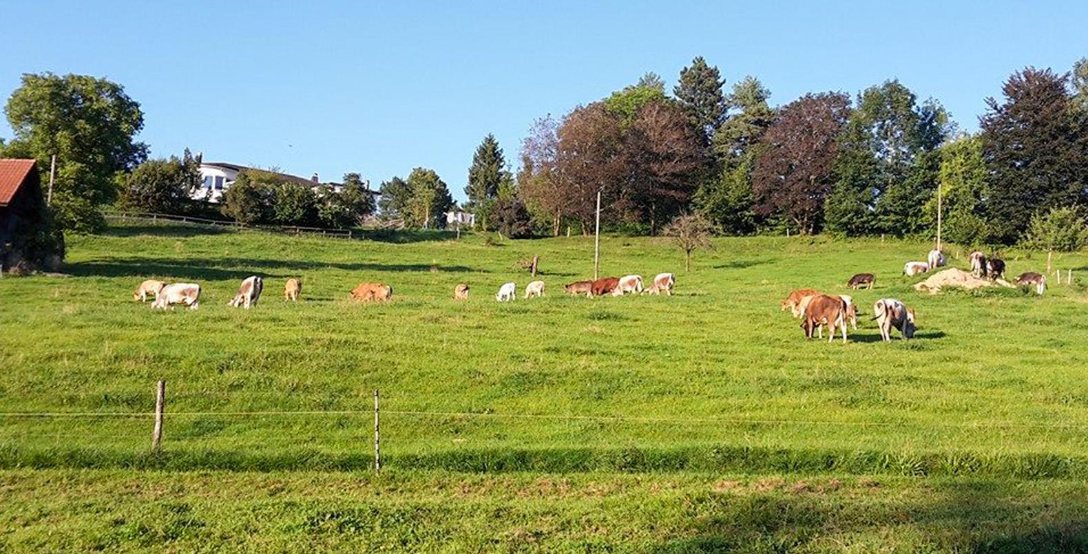 Bauernhof kennenlernen Schule am Bauernhof