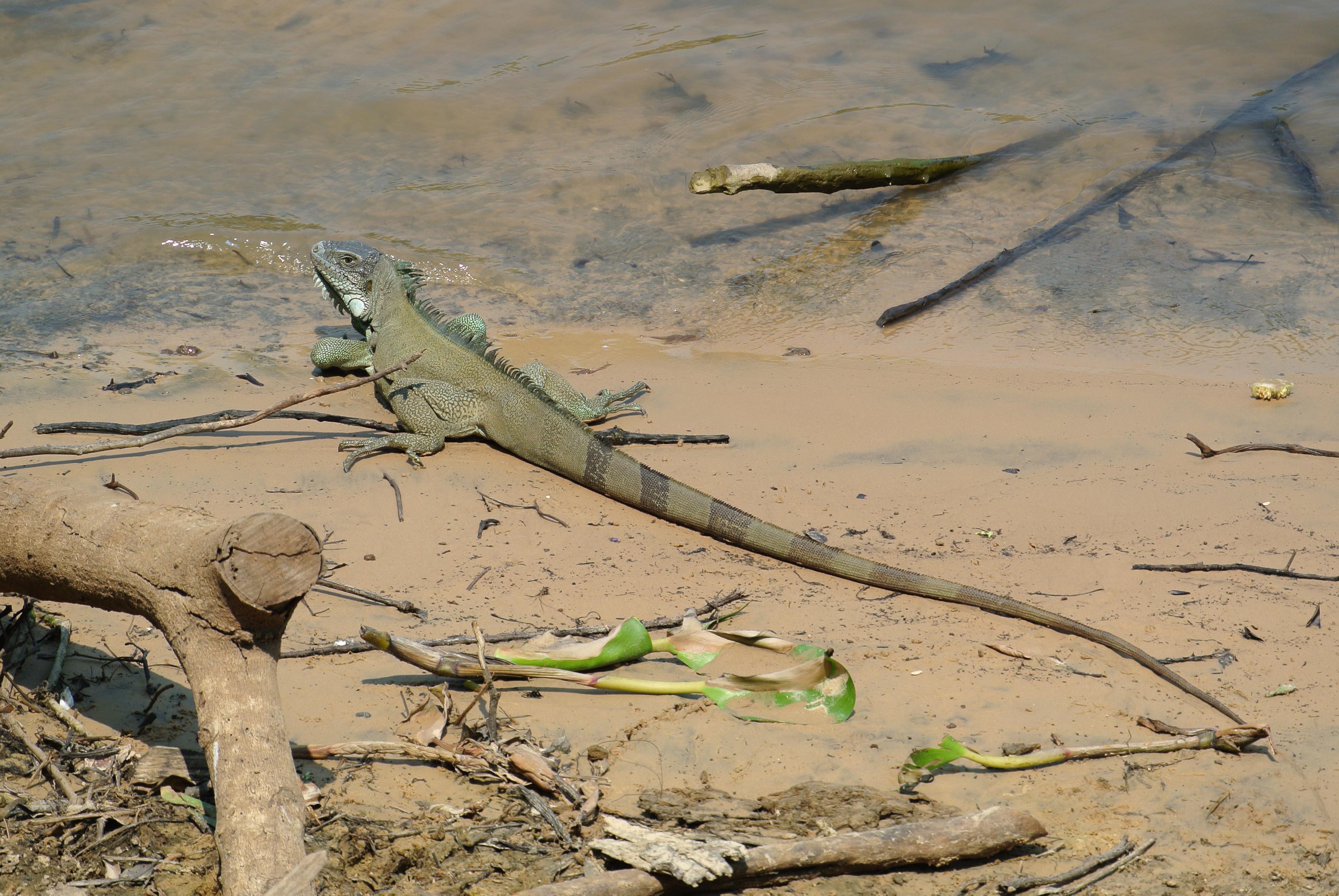 032 2309 Pantanal - Passo do Lontra 80JPG