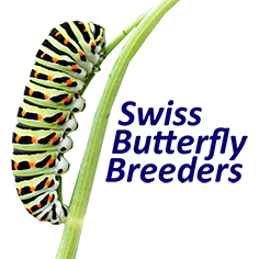 SWISS BUTTERRFLY BREEDERS