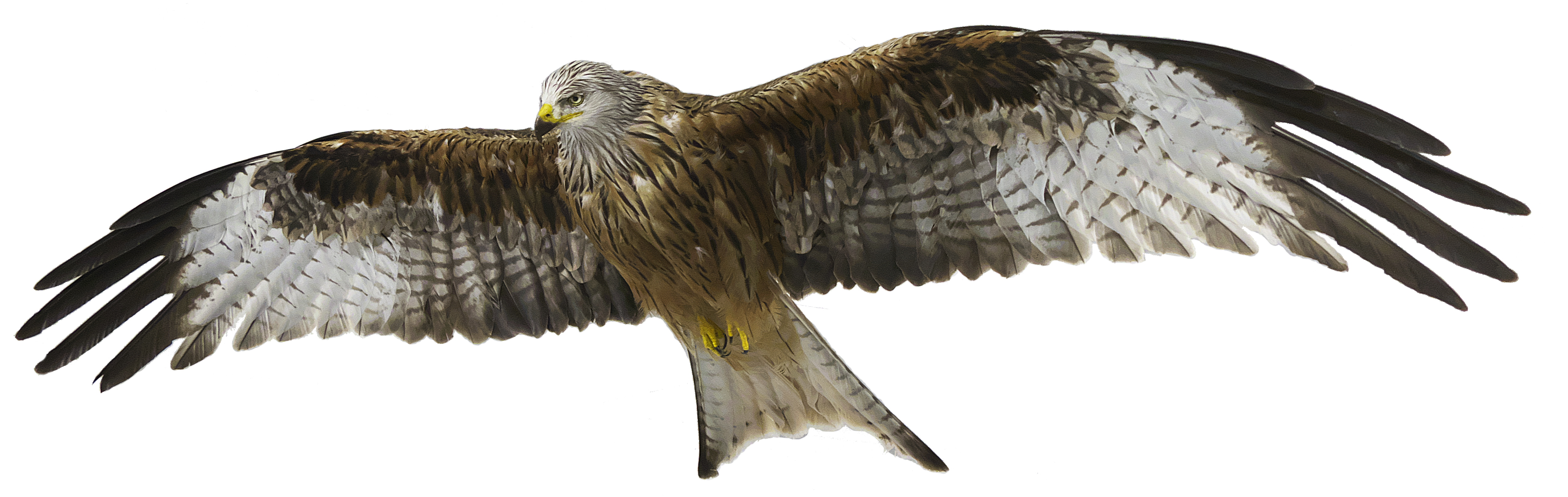 2red-kite-3070295png