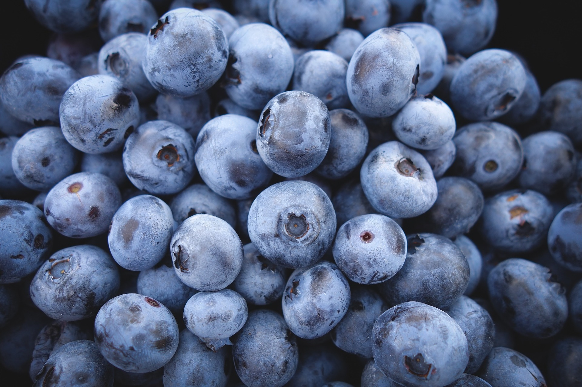 blueberries-690072_1920jpg