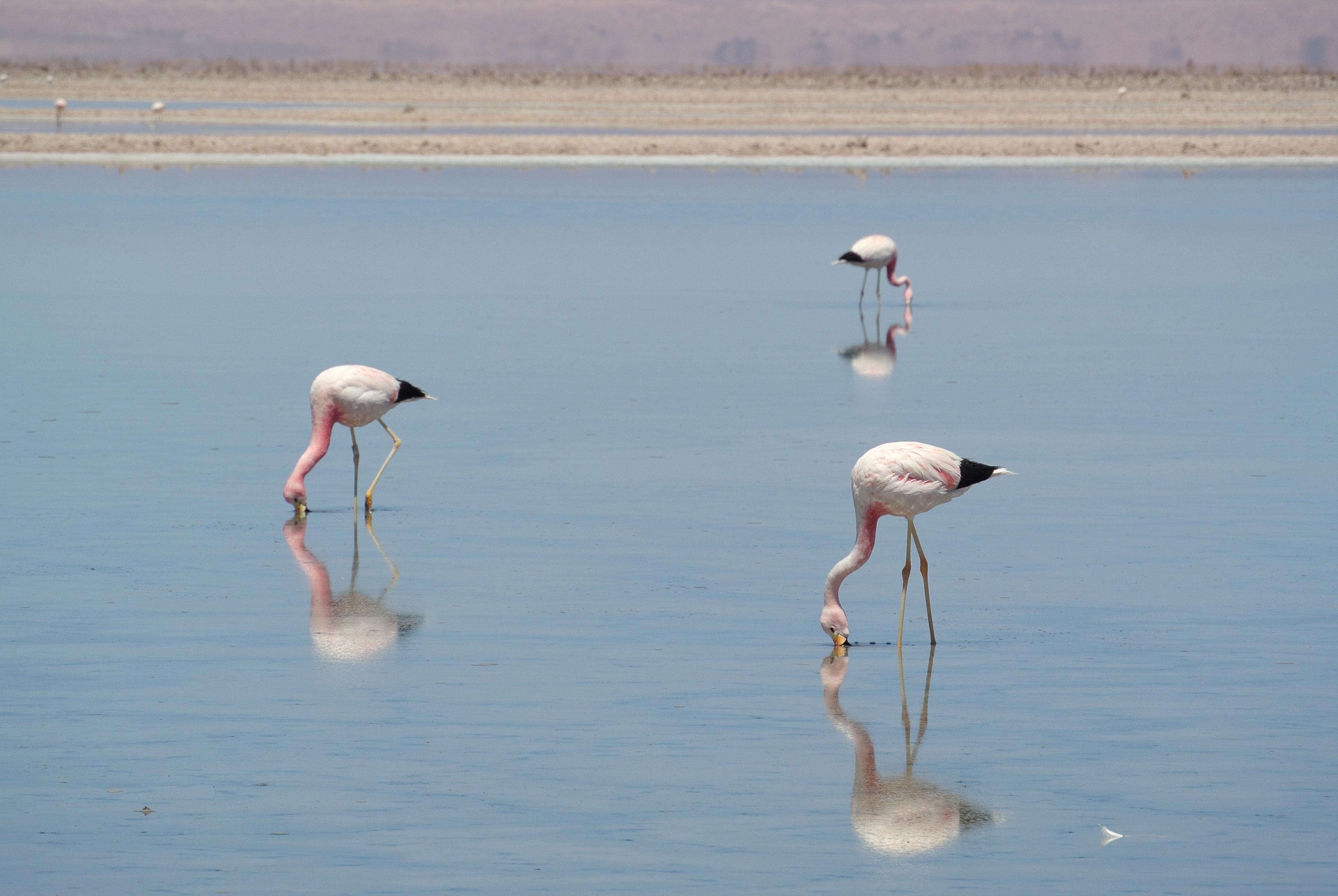 014 0912 Mirador - Salar de Atacama 29jpeg