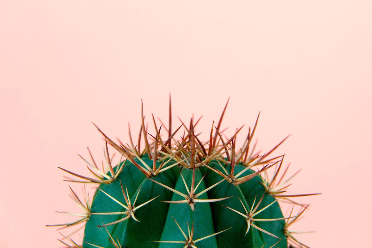 Haarentfernung Foto Kaktus - bei Preisenjpg