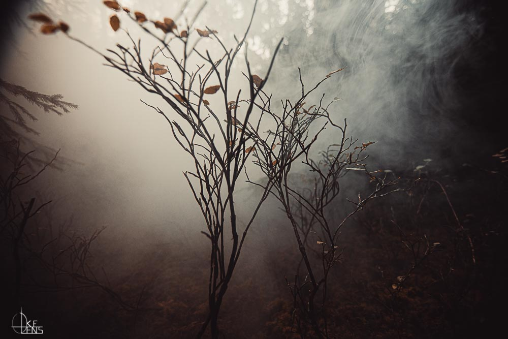 Foggy Forest II