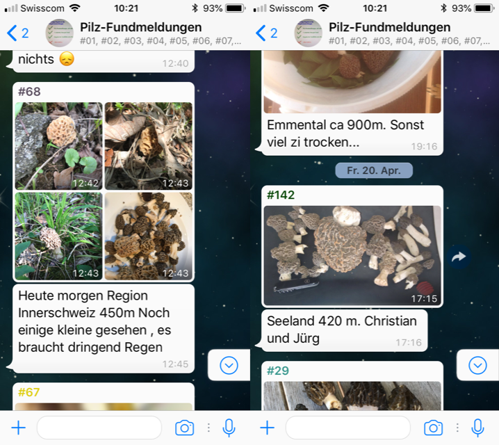 Morchel-Saison  im Fundmelder-Chat