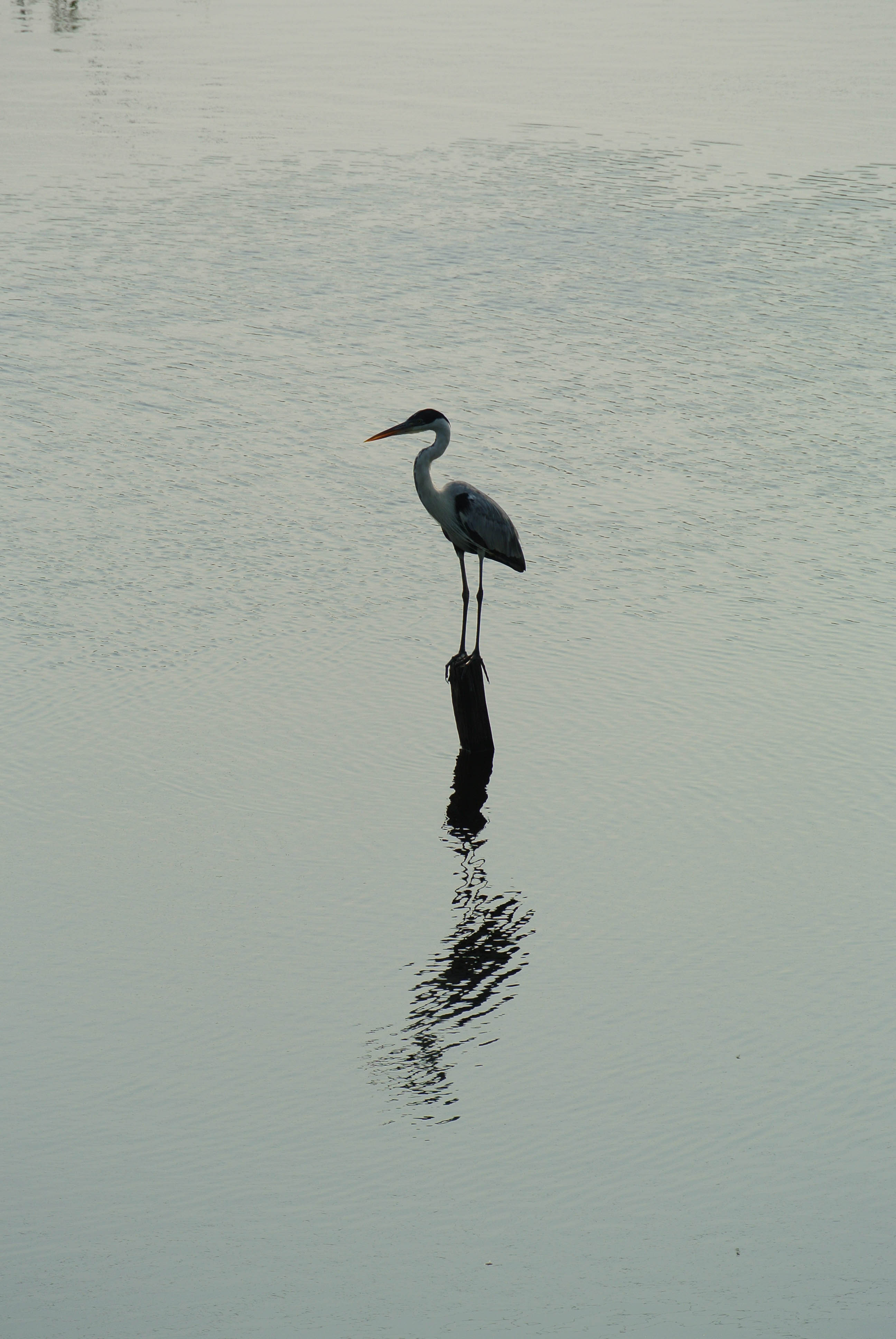 028 2309 Pantanal - Passo do Lontra 12JPG