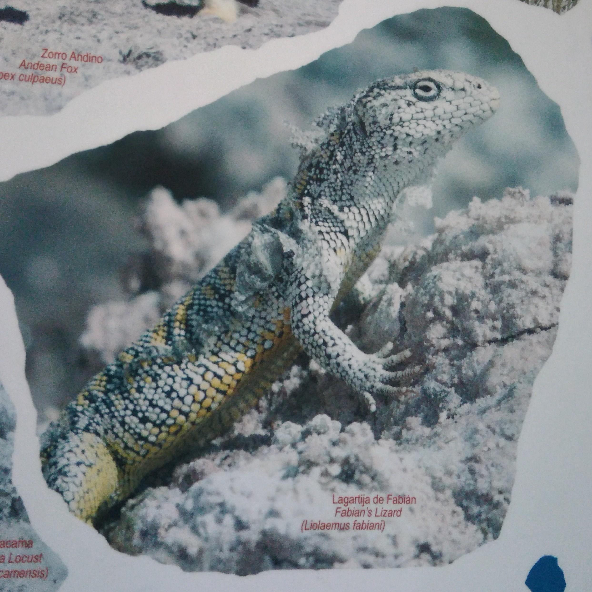 0211 0912 Mirador - Salar de Atacama 121jpeg