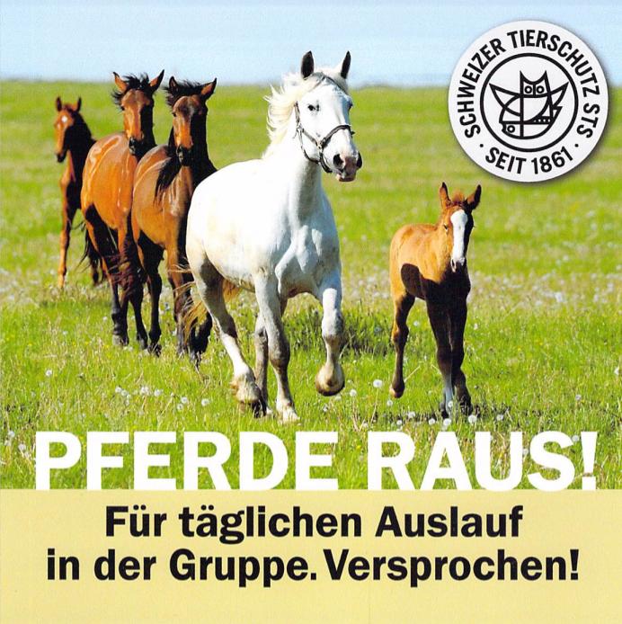 Pferde rausPNG