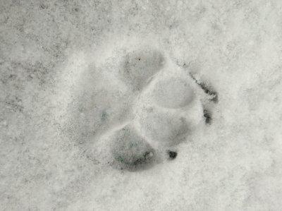 Pfotenabdruck Schneejpg