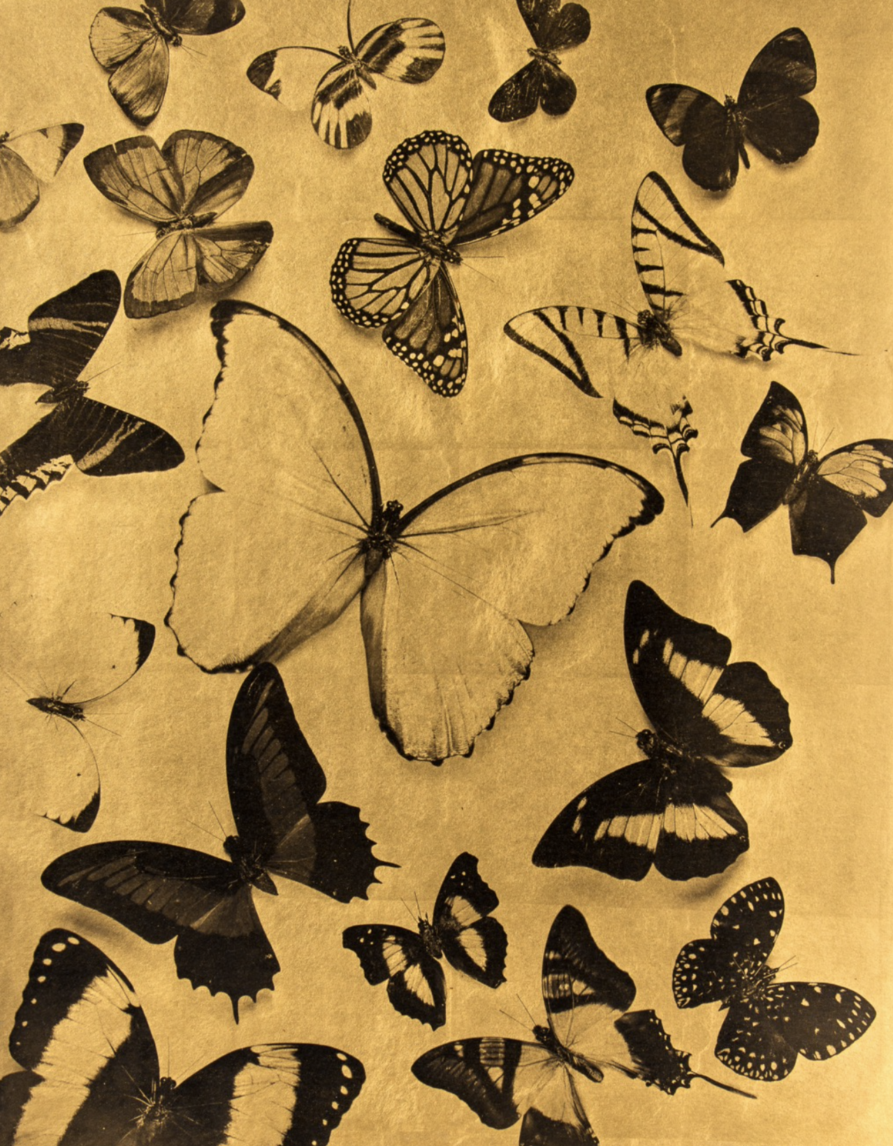 Palladium print & pure gold leaf on Japanese paper