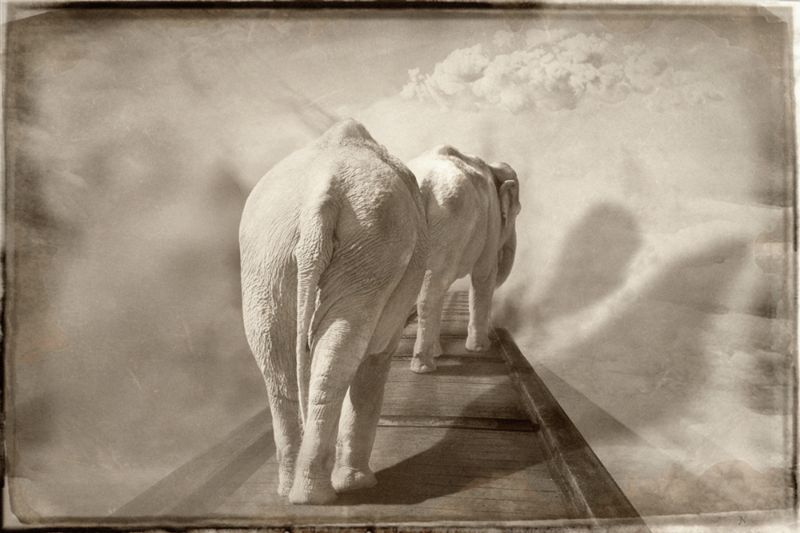 Elephants in the sky
