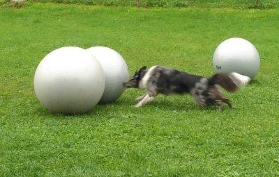 Treibball am Ball Joshijpg