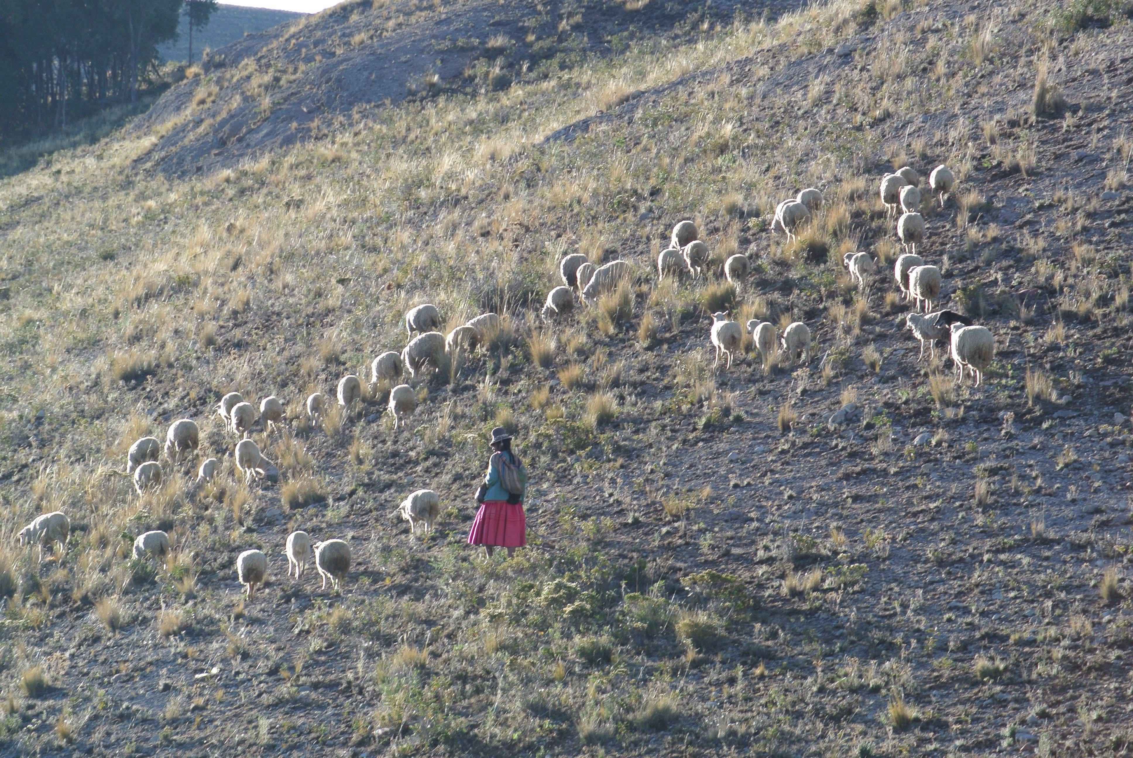 005 2111 Titicacasee 18jpeg