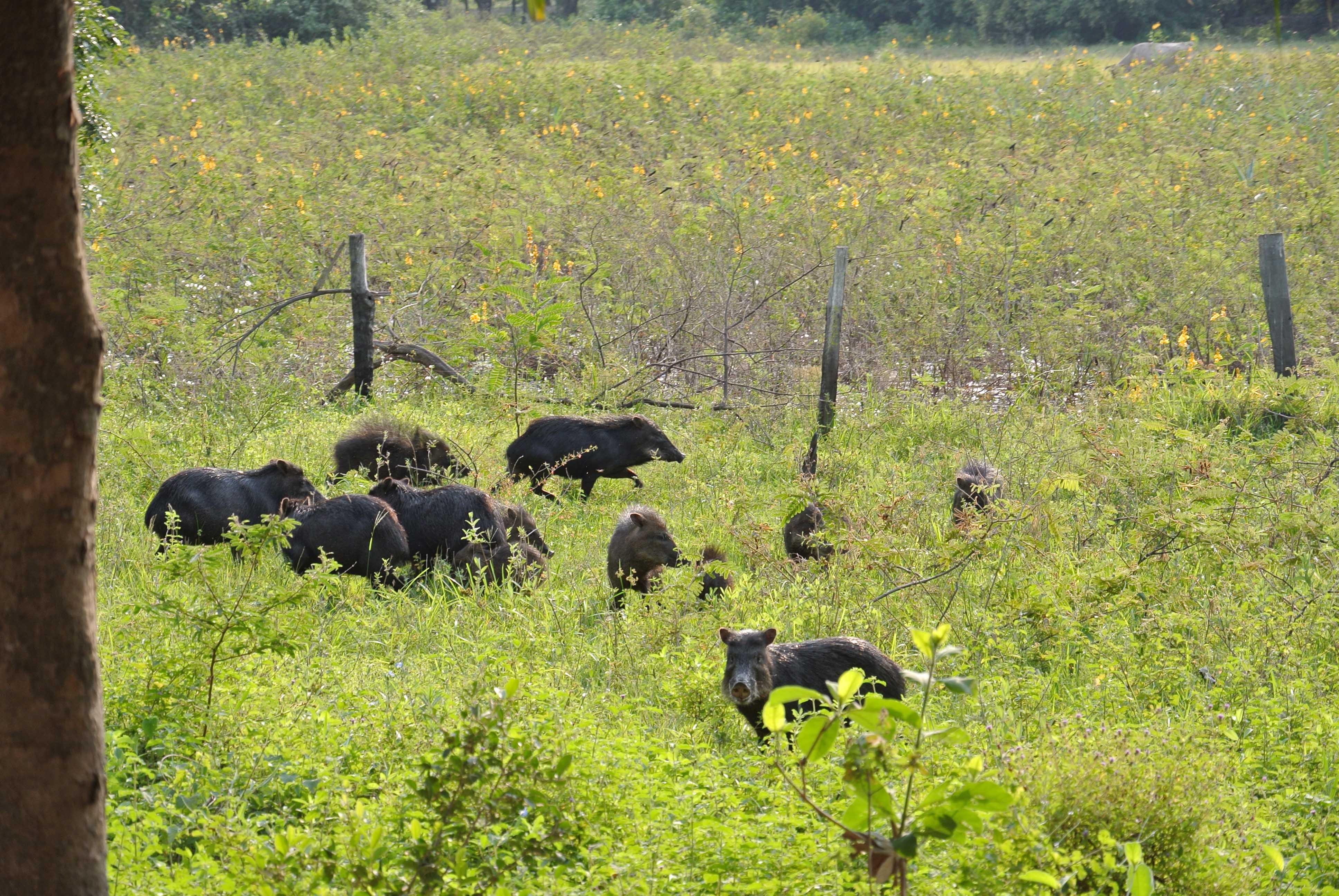 031 2409 Pantanal - Passo do Lontra - Corumba 28JPG