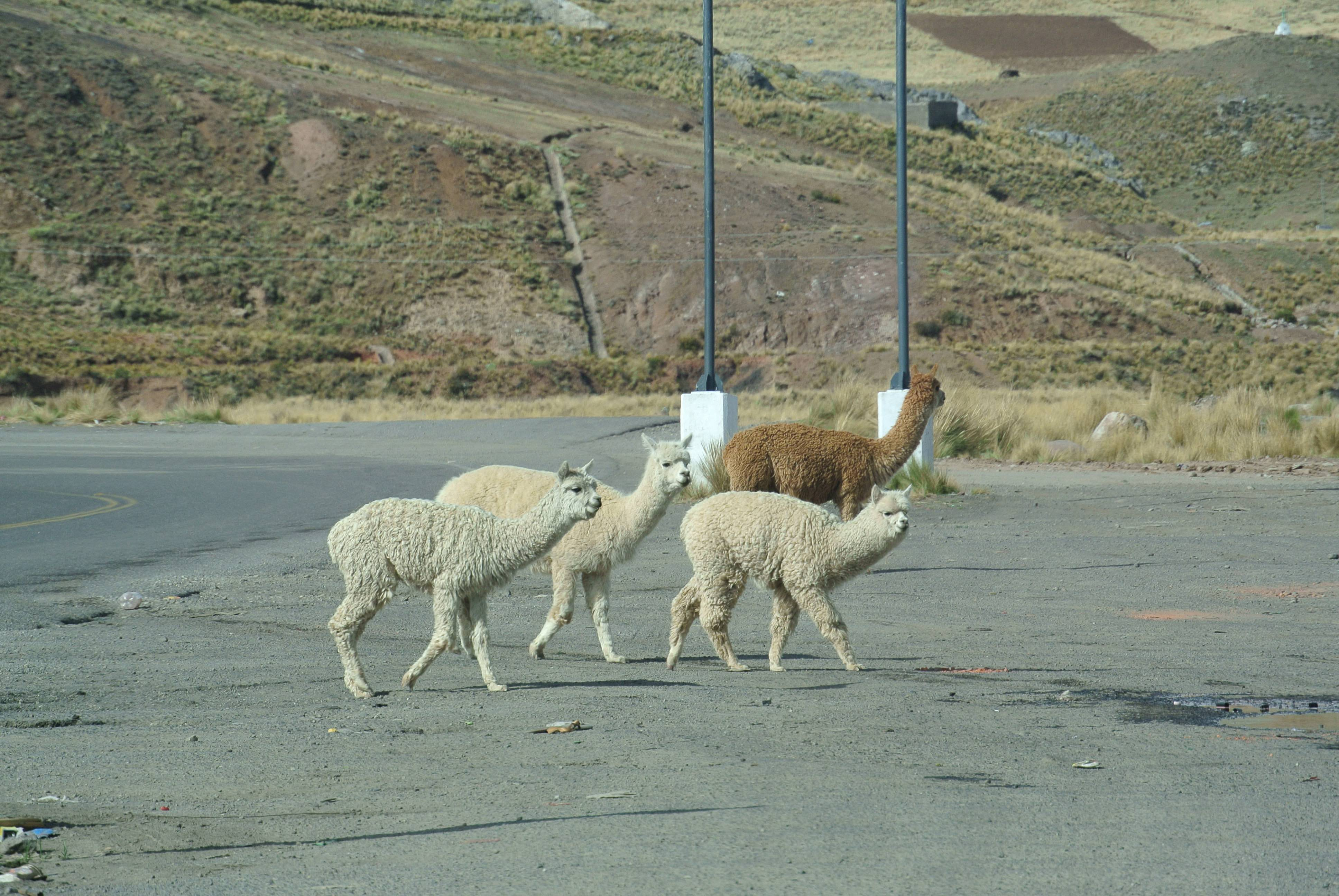 009 2211 Titicacasee - Laguna Lagunillas 12jpeg