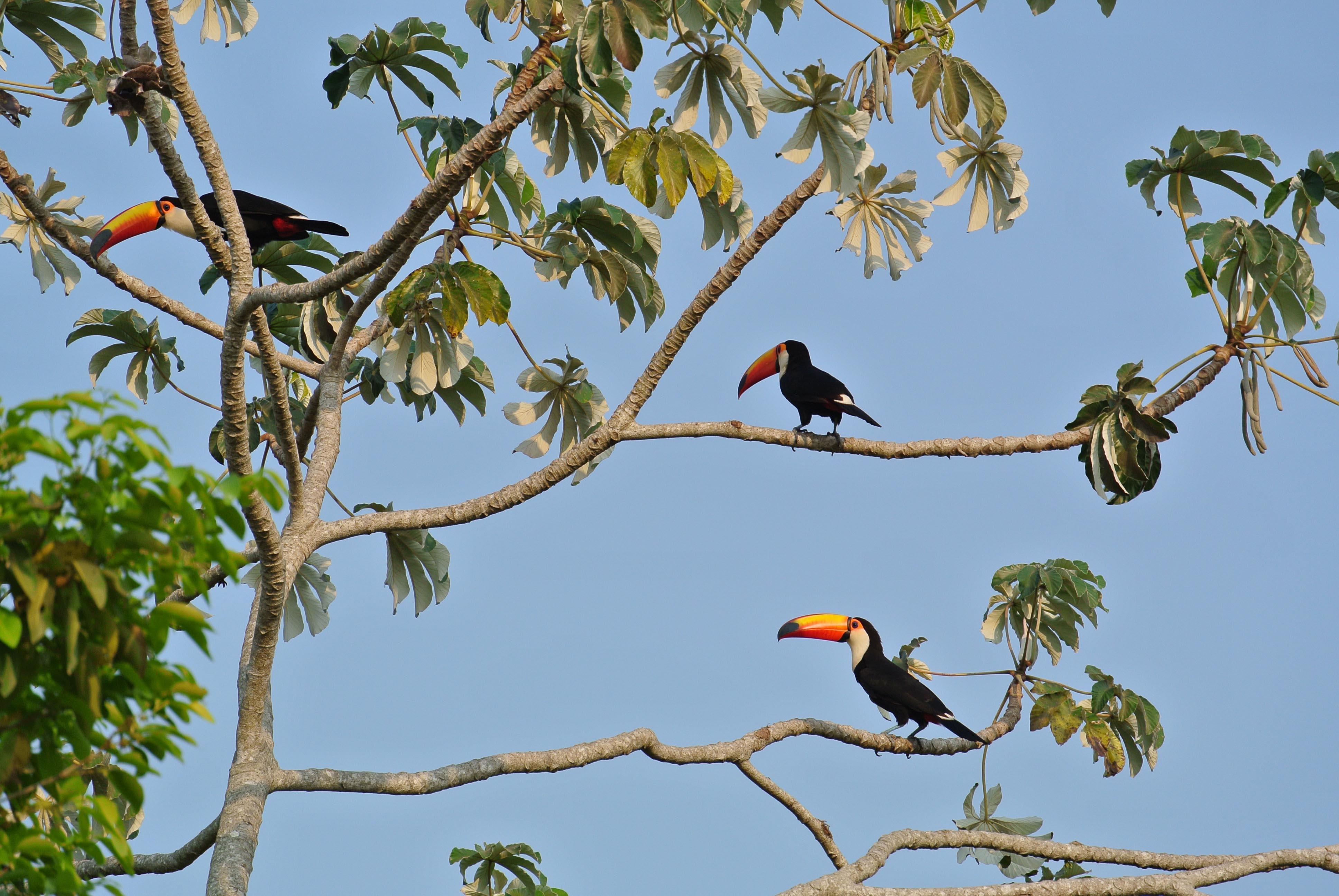 029 2409 Pantanal - Passo do Lontra - Corumba 26JPG