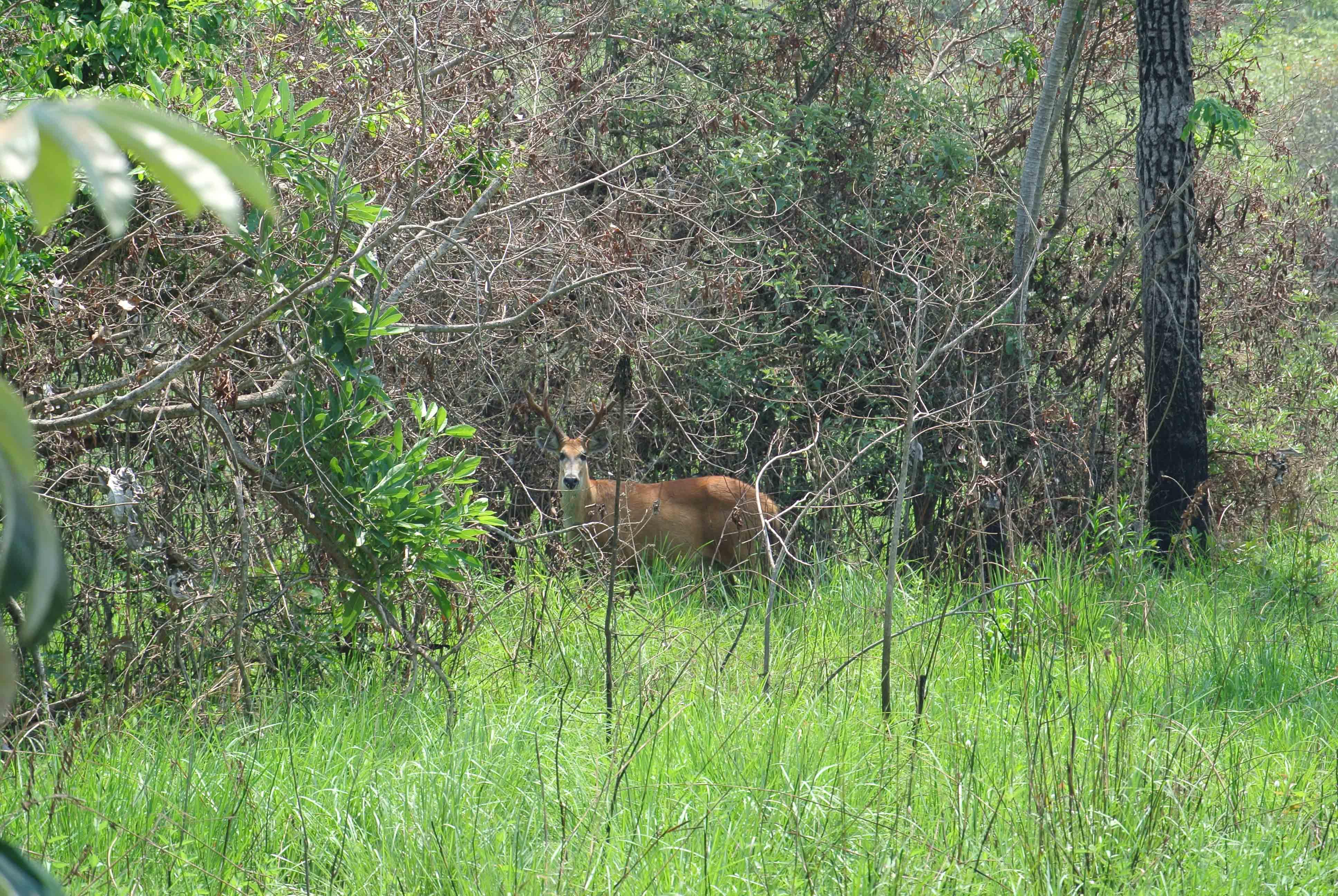 026 2309 Pantanal - Passo do Lontra 59JPG
