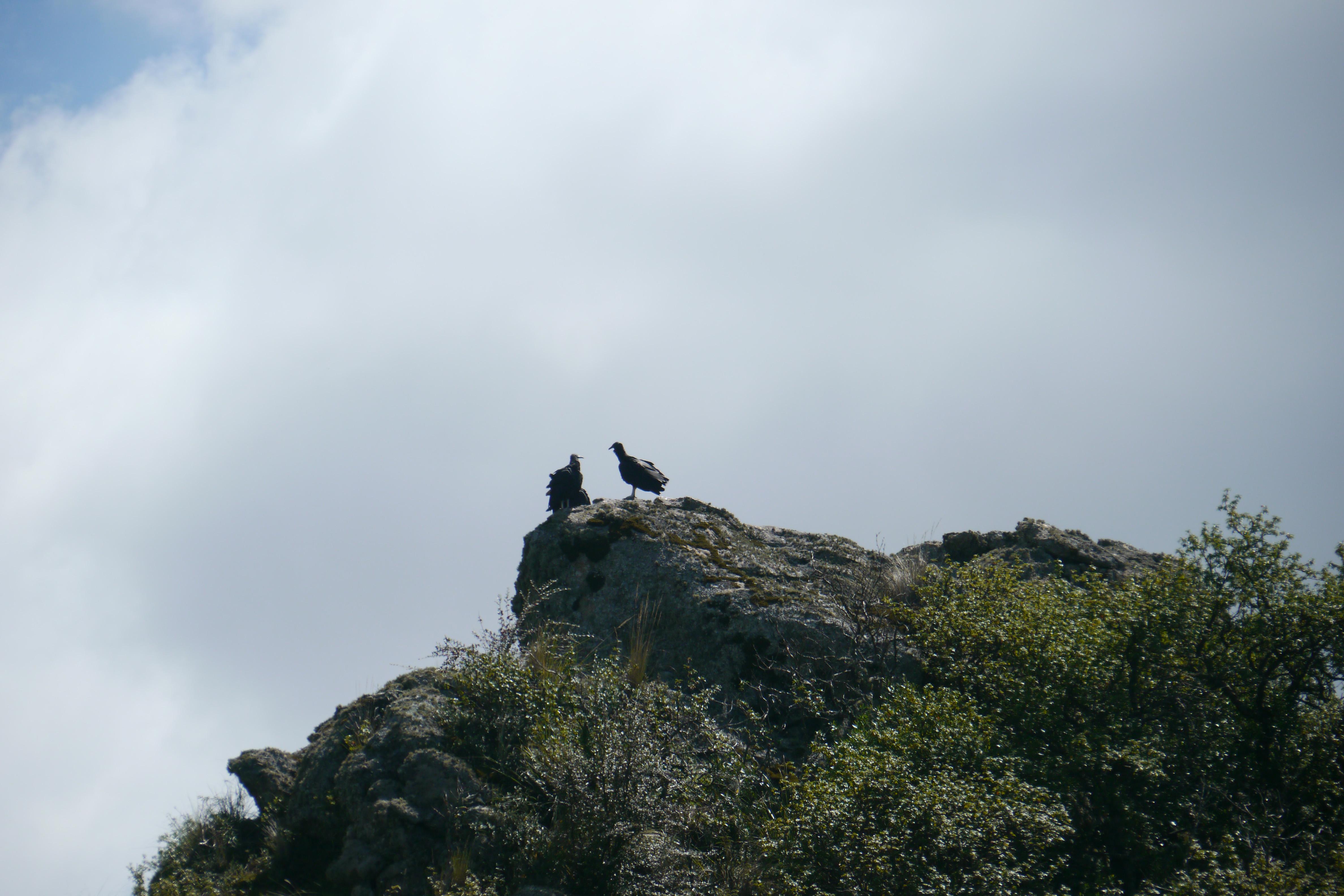 011 0903 NP Quebrada del Condorito 17JPG