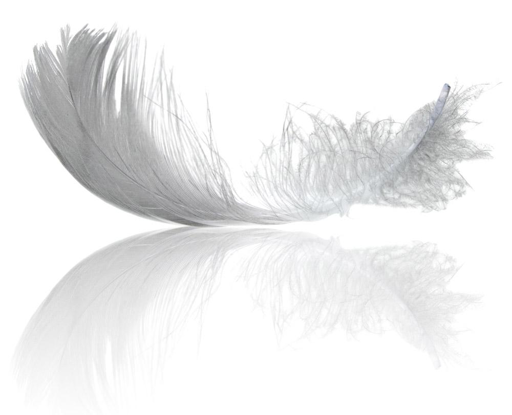 Feather printjpg
