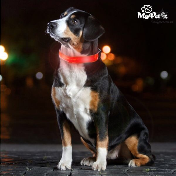 LED Hundehalsband von My Pet