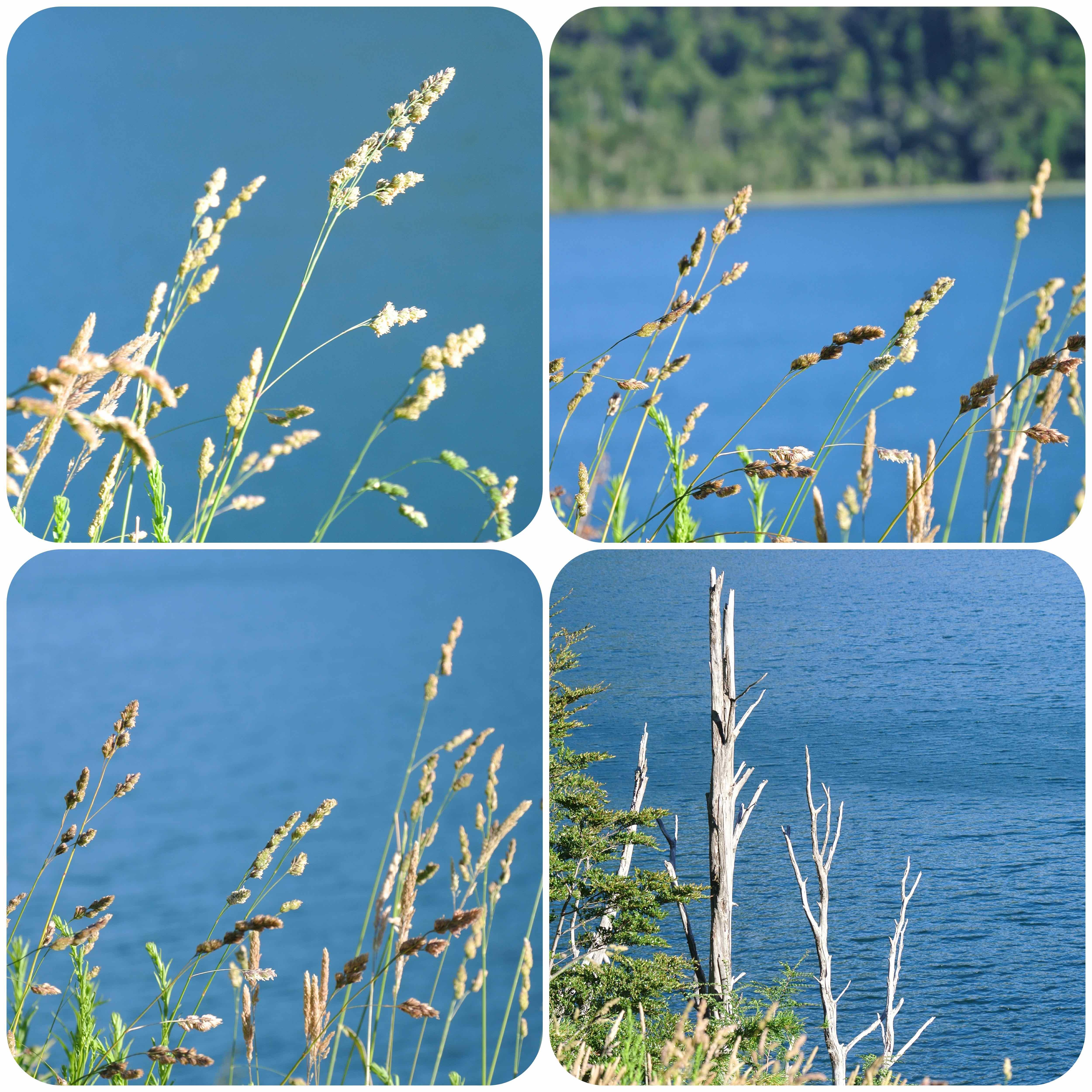003 2301 Lago Quillelhue - Mirador Lago Calafquen 51jpg
