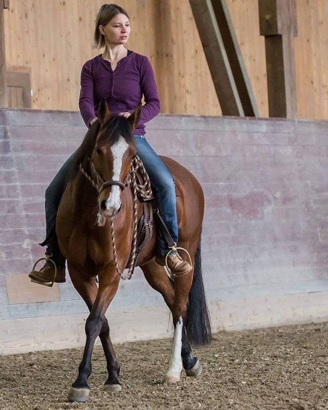 horsesofinstagram_bosaljpg