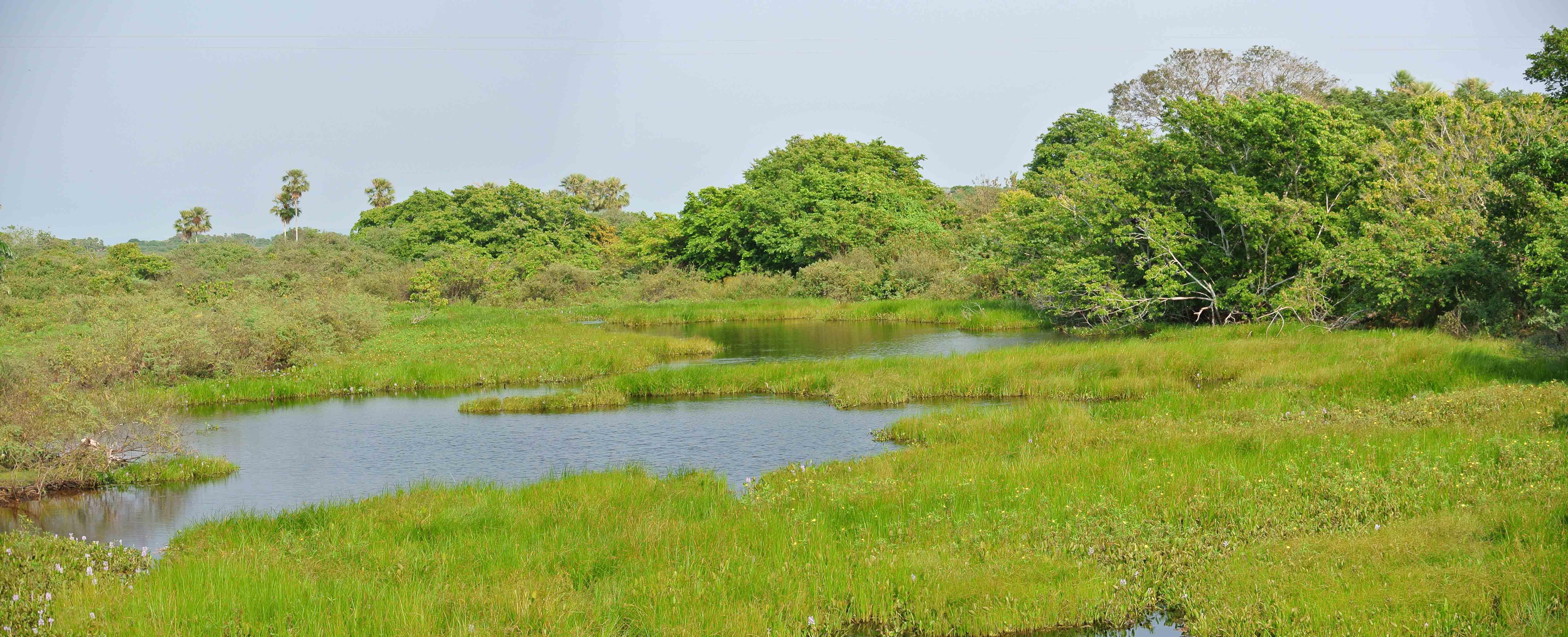 034 2409 Pantanal - Passo do Lontra - Corumba 511jpg