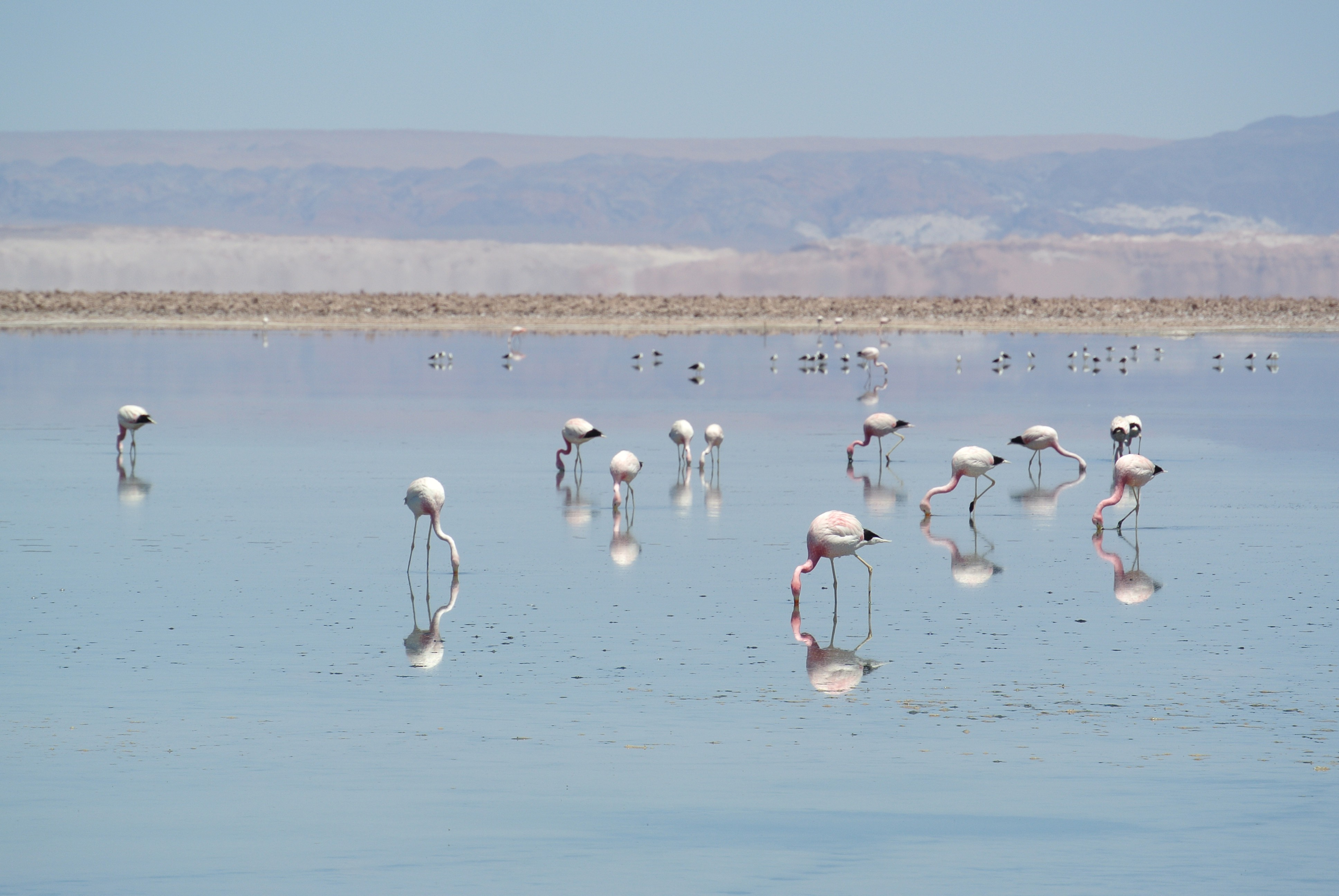 015 0912 Mirador - Salar de Atacama 30jpeg