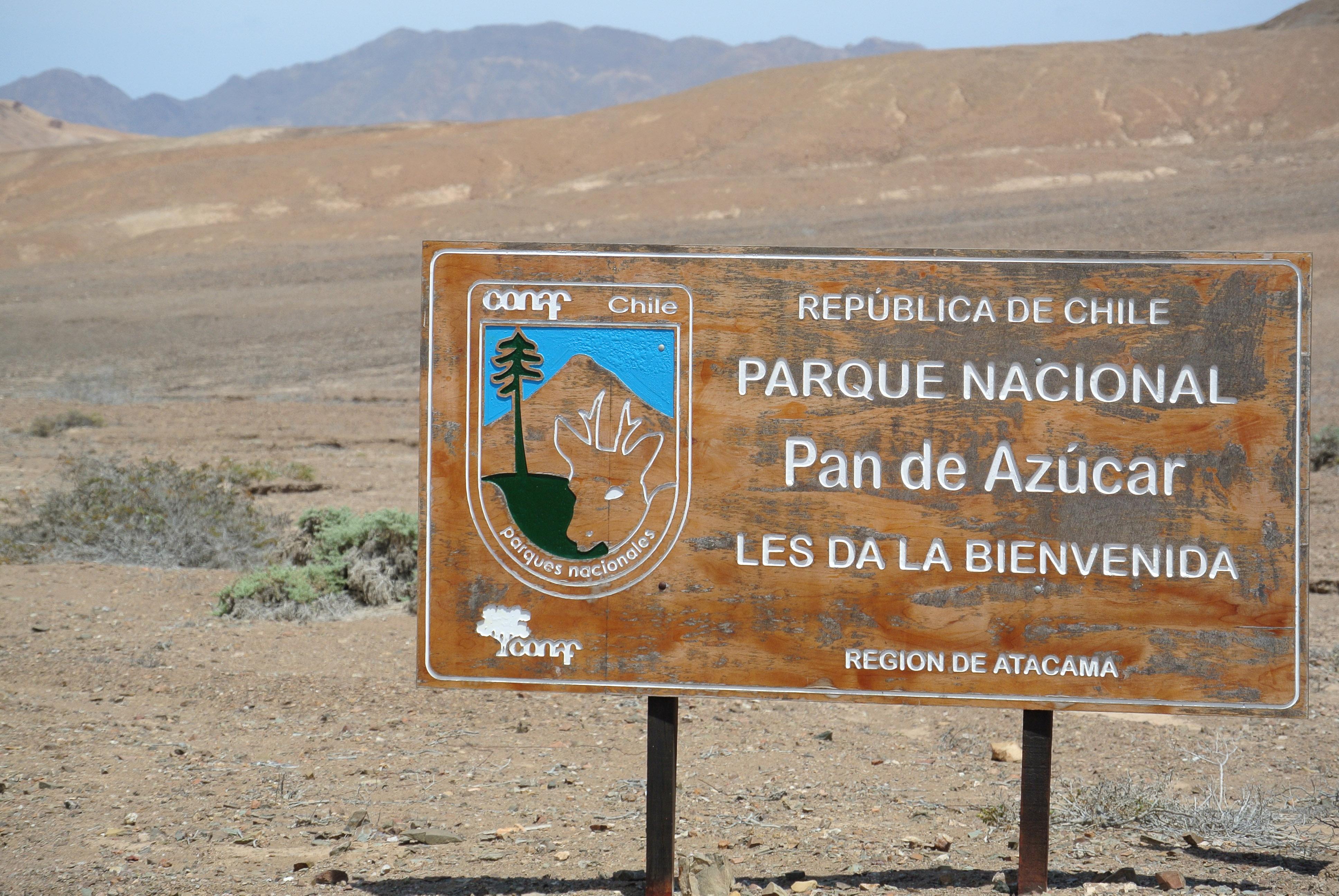 021 1812 Paposa - PN Pan de Azucar 2JPG