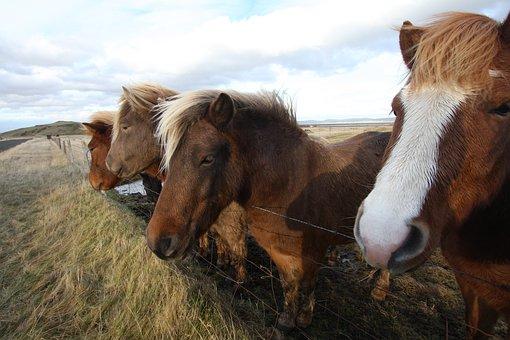 horses-1877738__340jpg