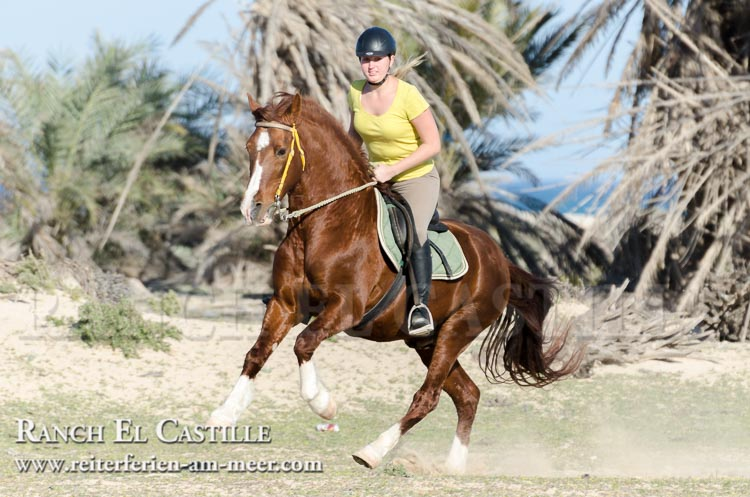 Ranch El Castille - Reiterferien am Meer - Tunesien