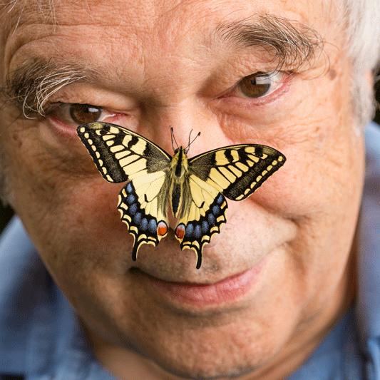 Papa Papillon