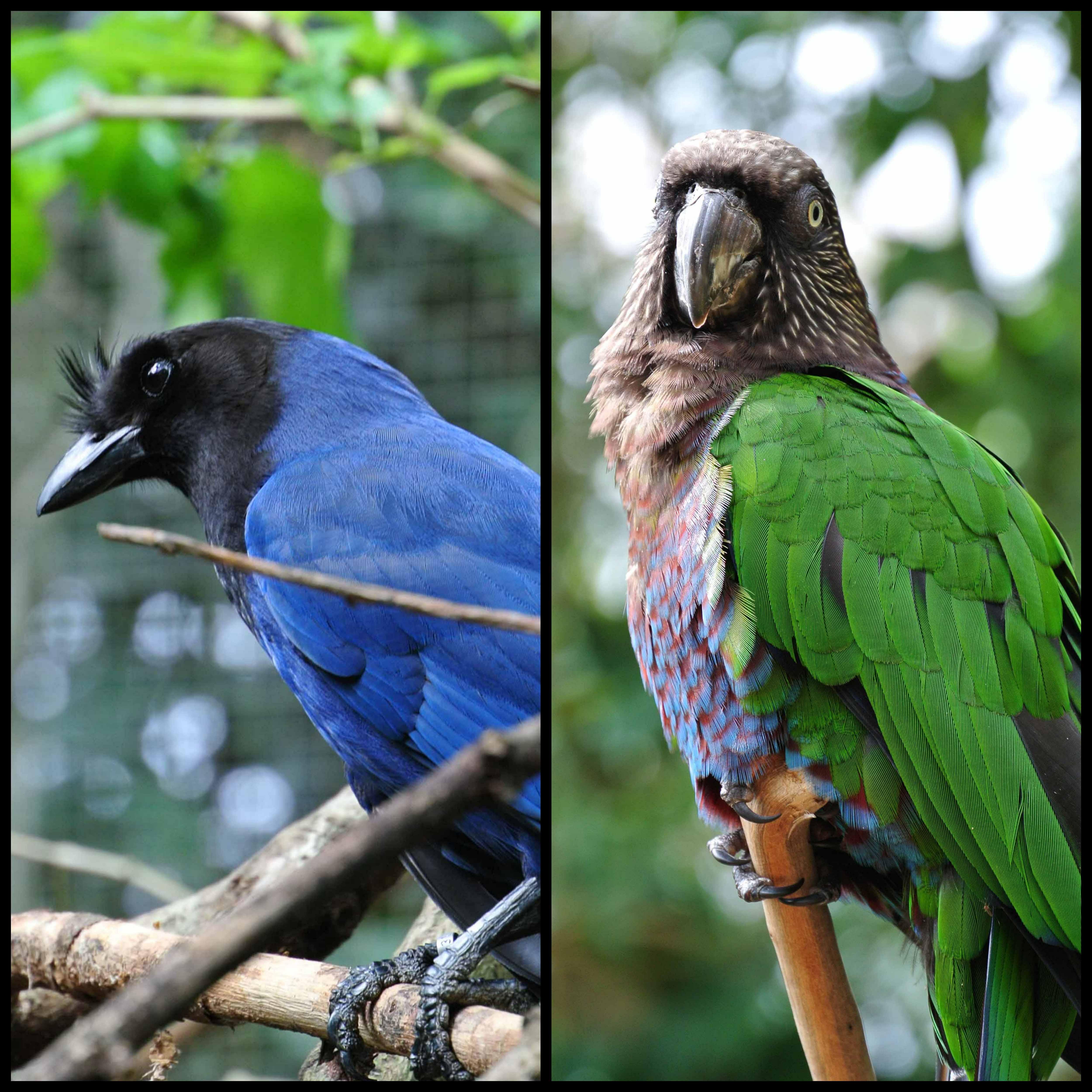 0021608parquedasaves-vogelparkbrasilien8jpg