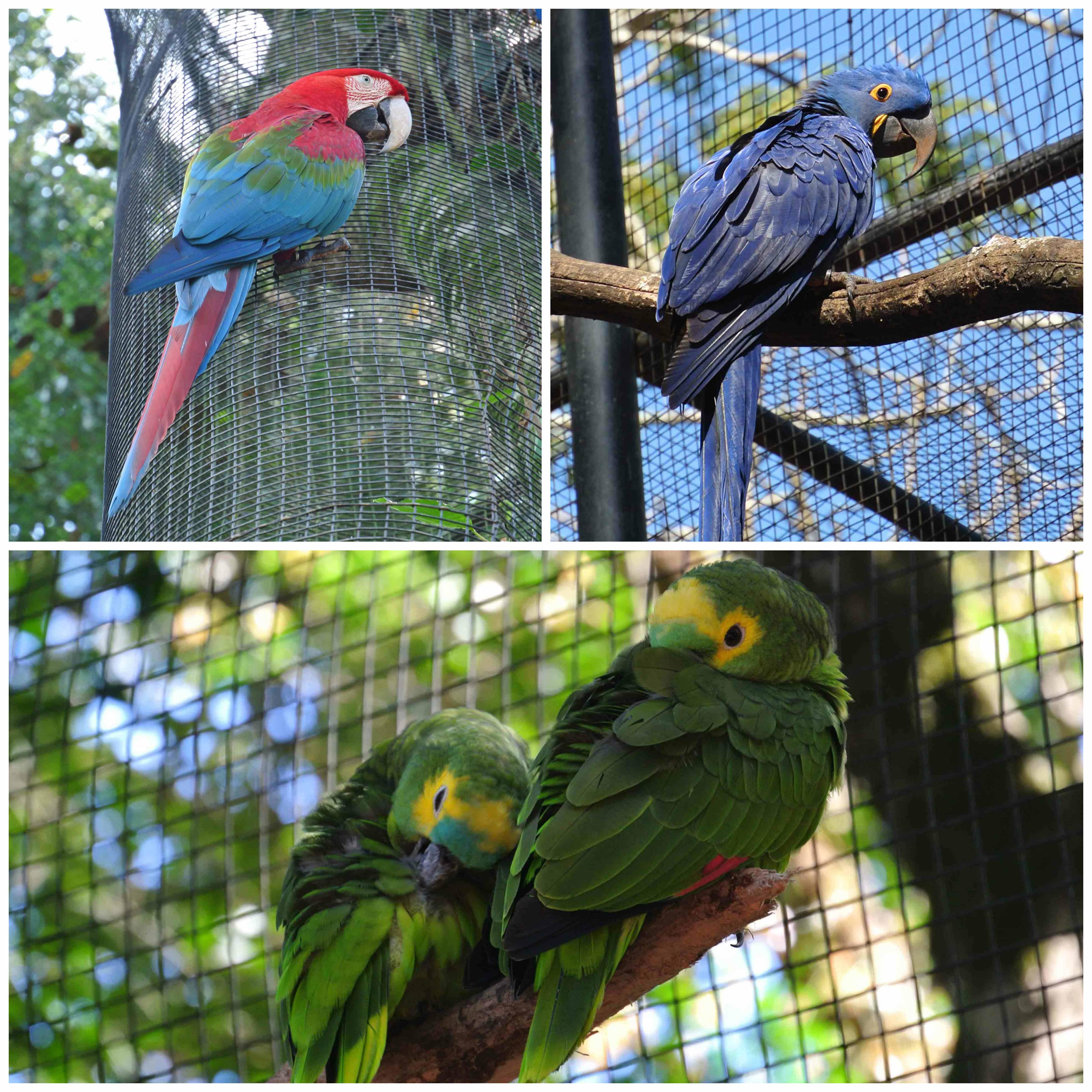 0041608parquedasaves-vogelparkbrasilien6jpg