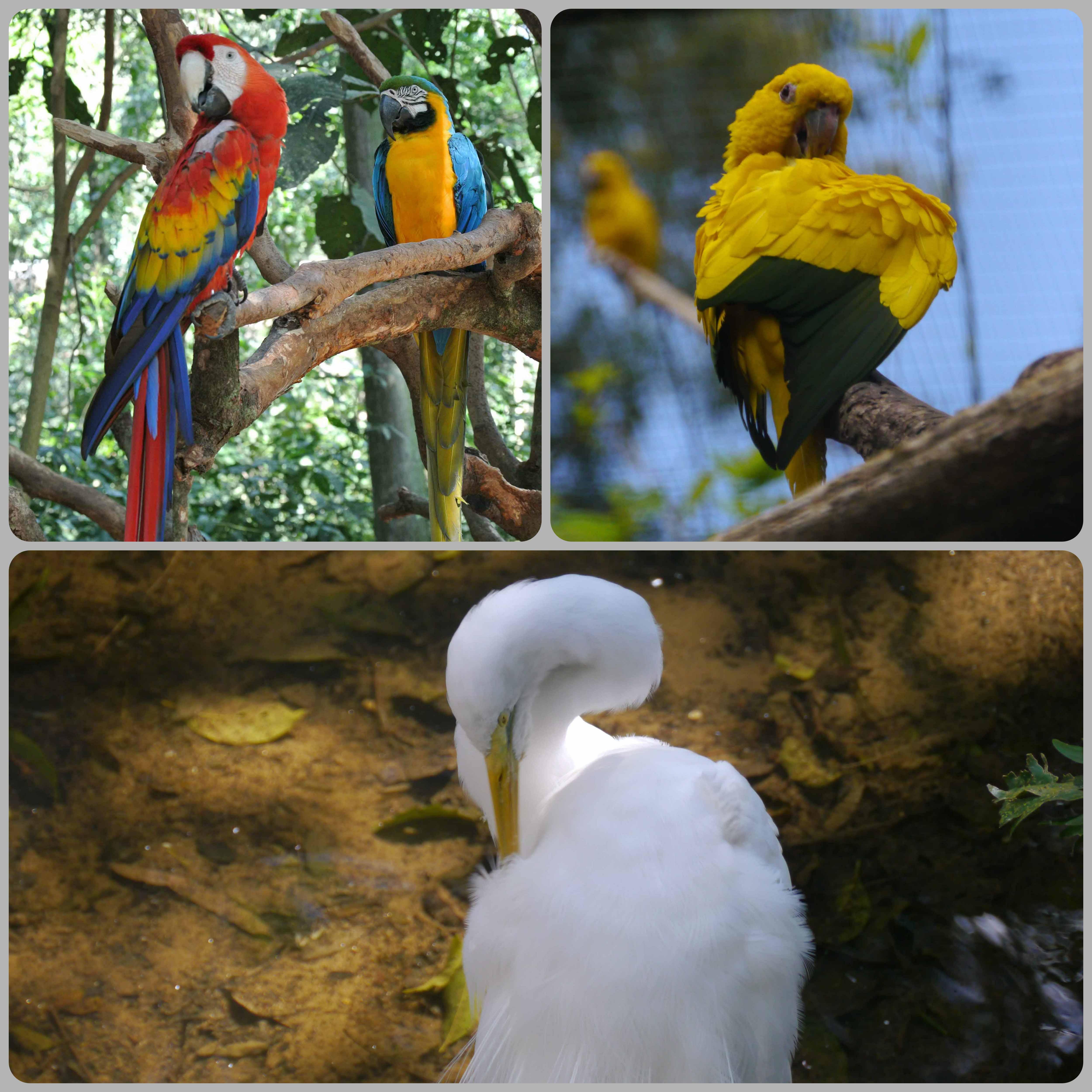 0071608parquedasaves-vogelparkbrasilien3jpg