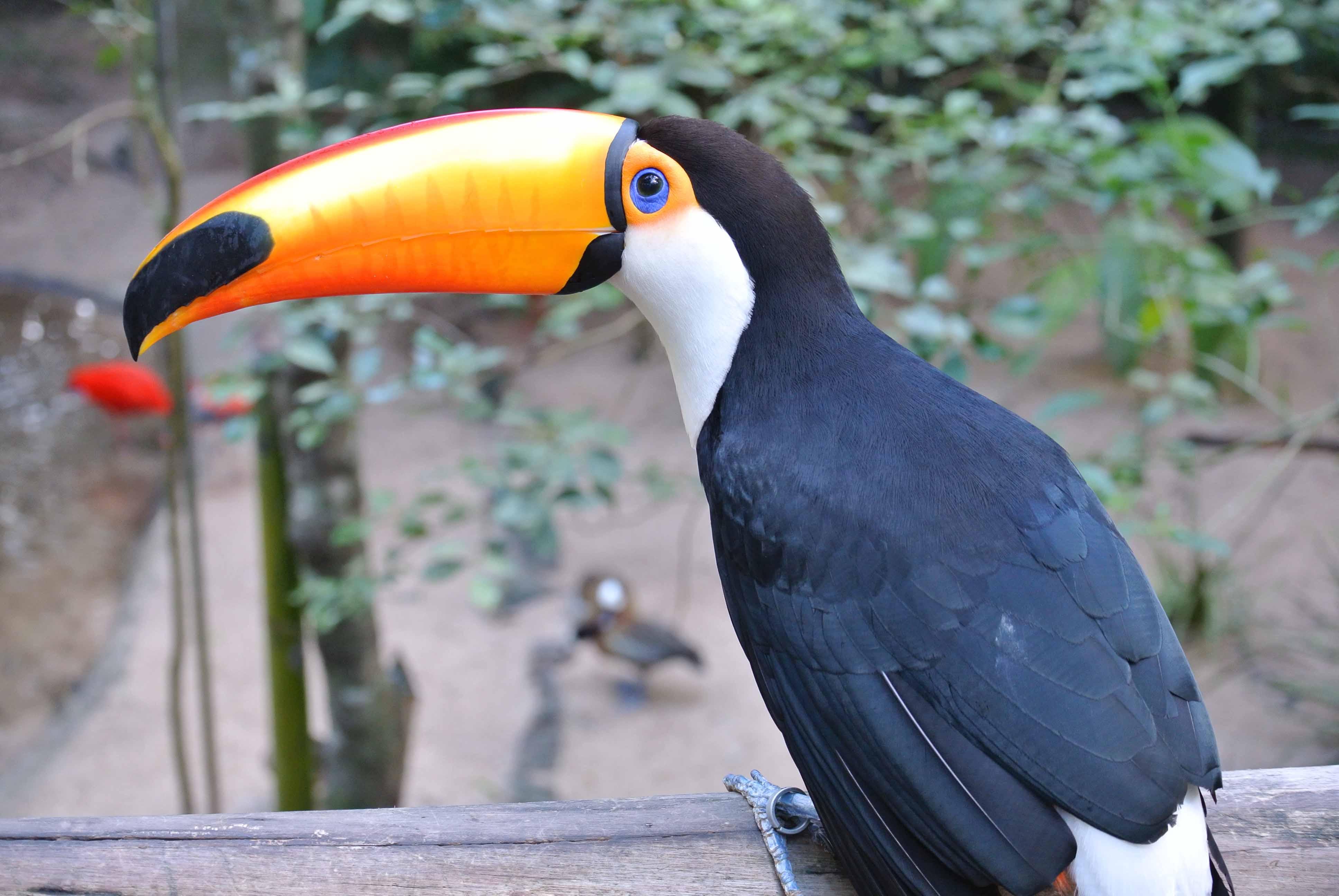 0091608parquedasaves-vogelparkbrasilien1jpg